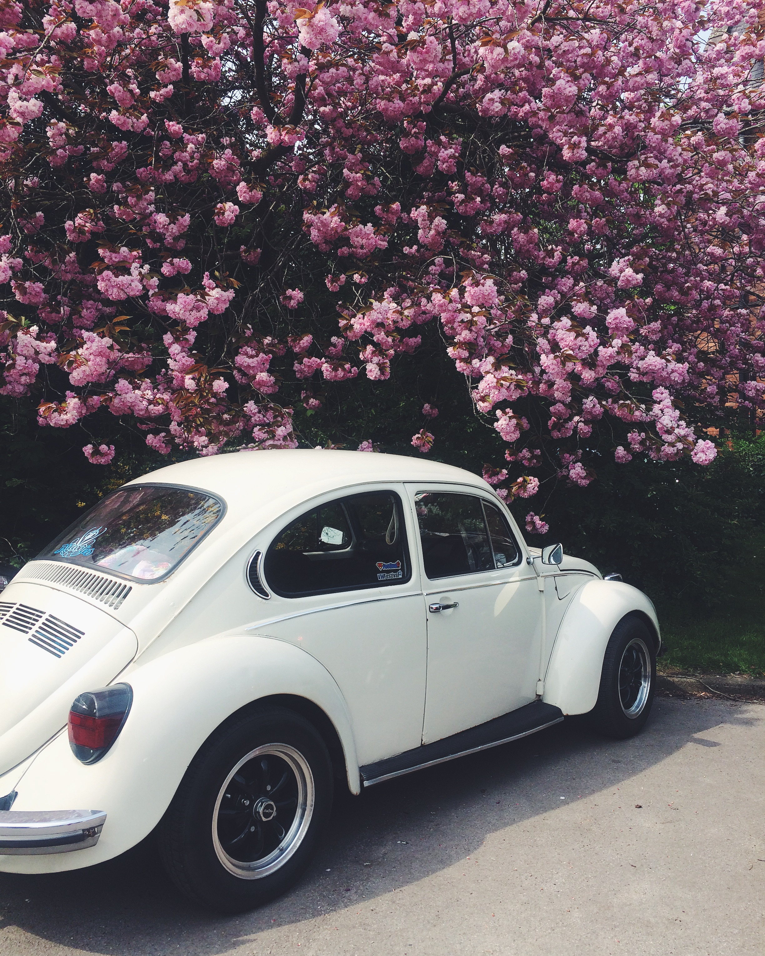 Vintage Beetle under blossom tree Spring