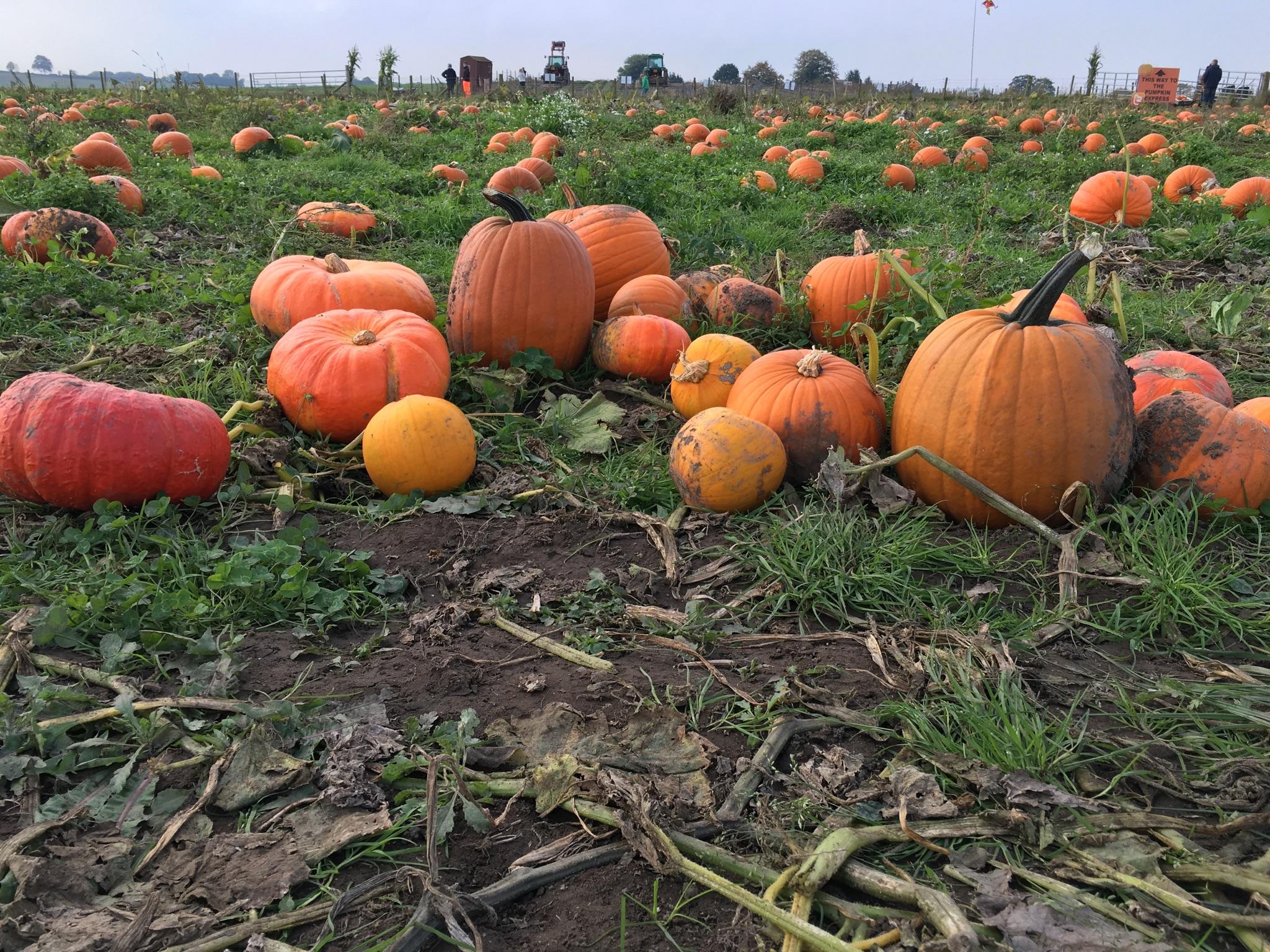 pumpkin patch field farmer copley pontefract