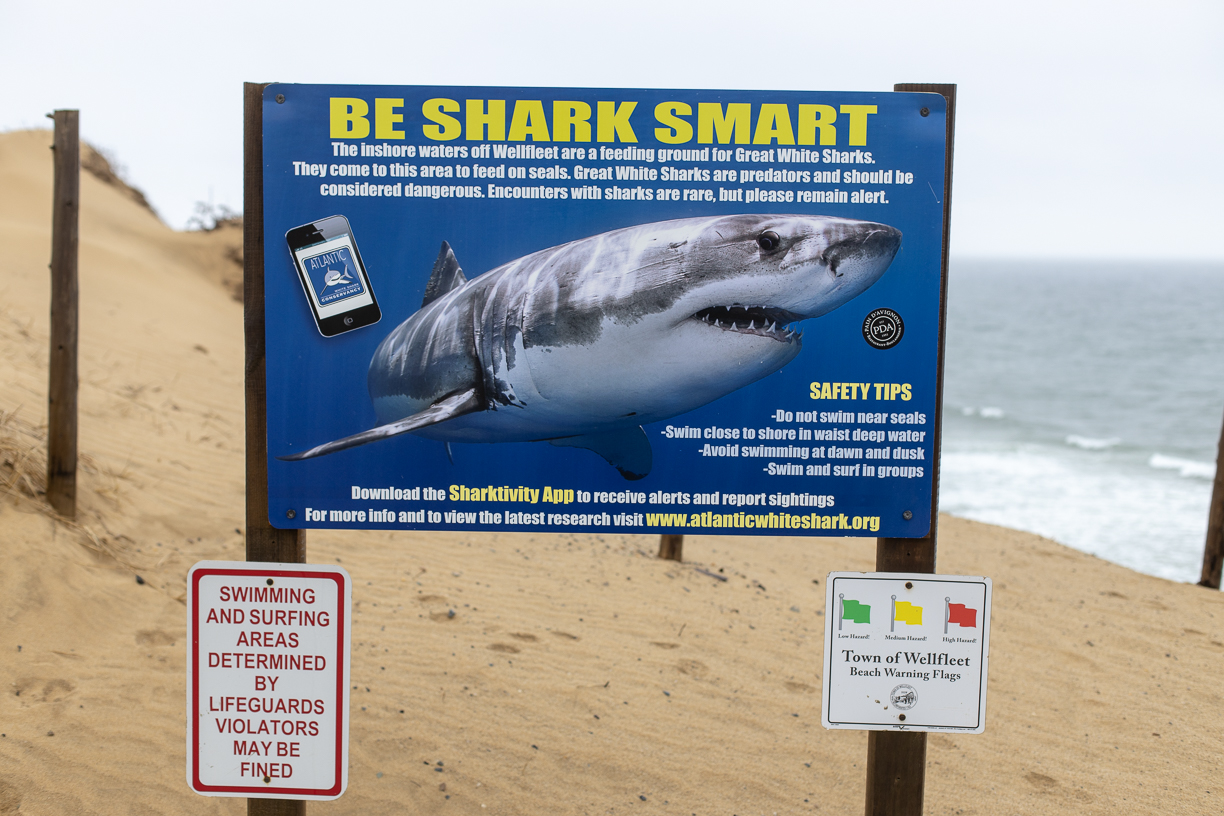 be shark smart visiting cape cod in winter
