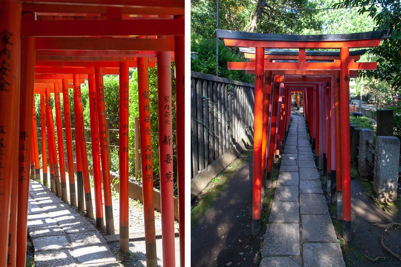 Nezu Shrine (根津神社) Torii gates