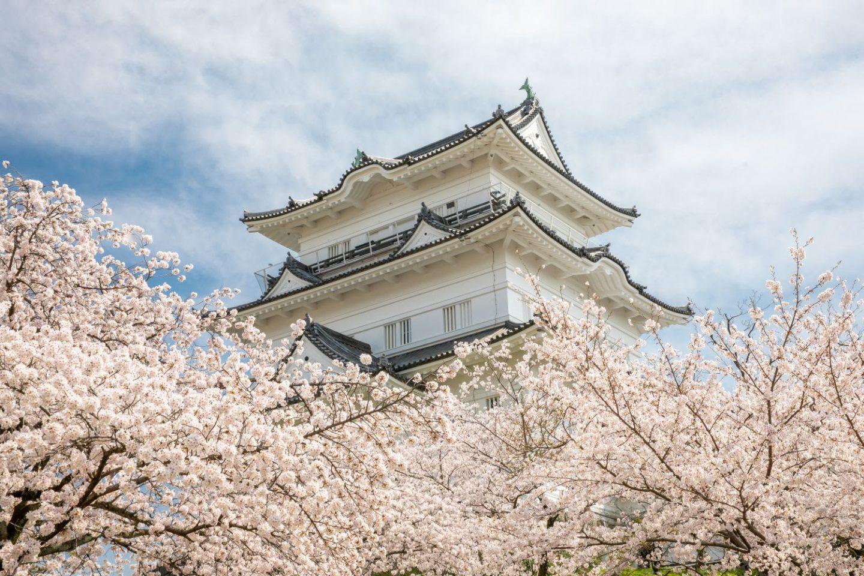 Odawara Castle in Tokyo Spring Cherry Blossom